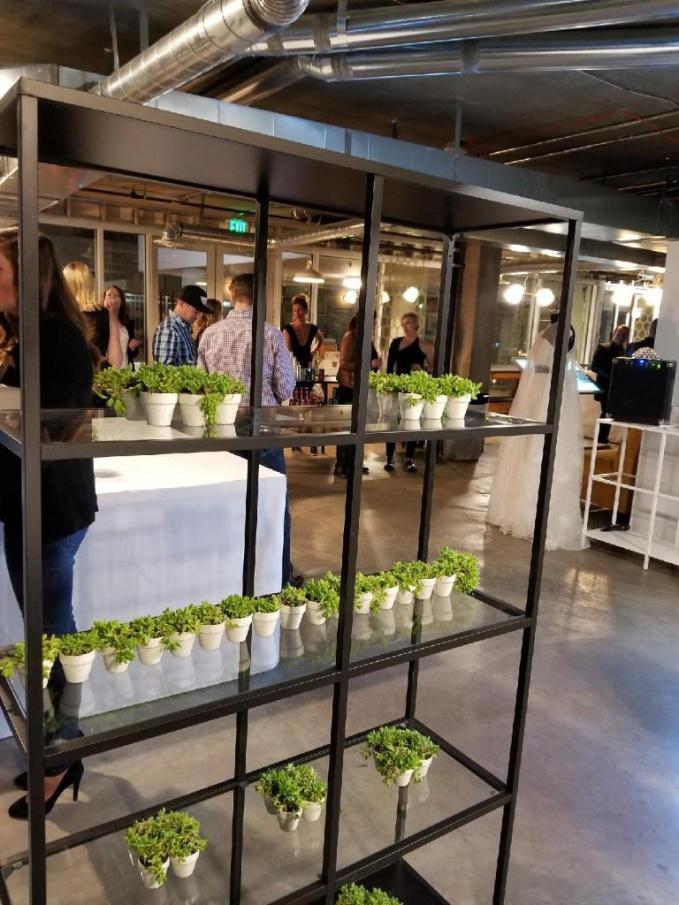 Launch Party Succulents People